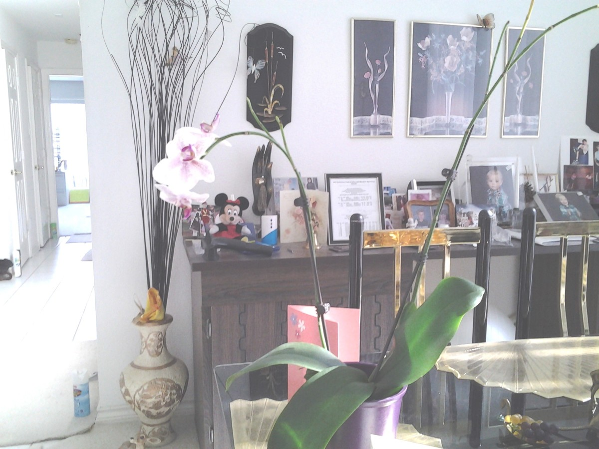 I just bought this orchid.