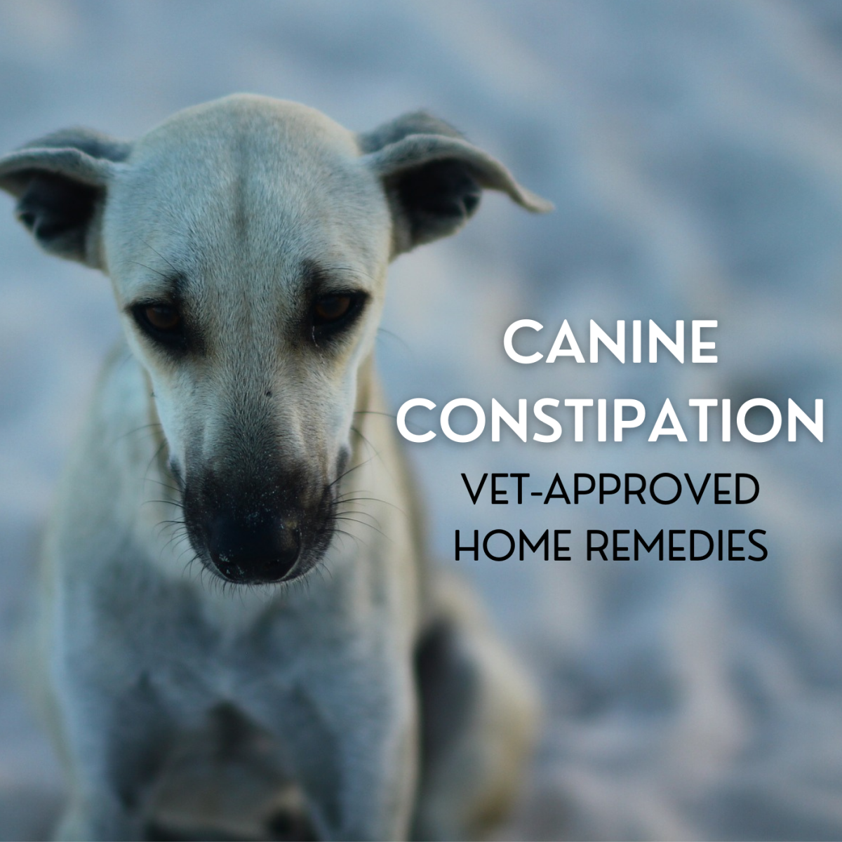 Learn about the potential causes of constipation in dogs, and review some home remedies you can discuss with your veterinarian.