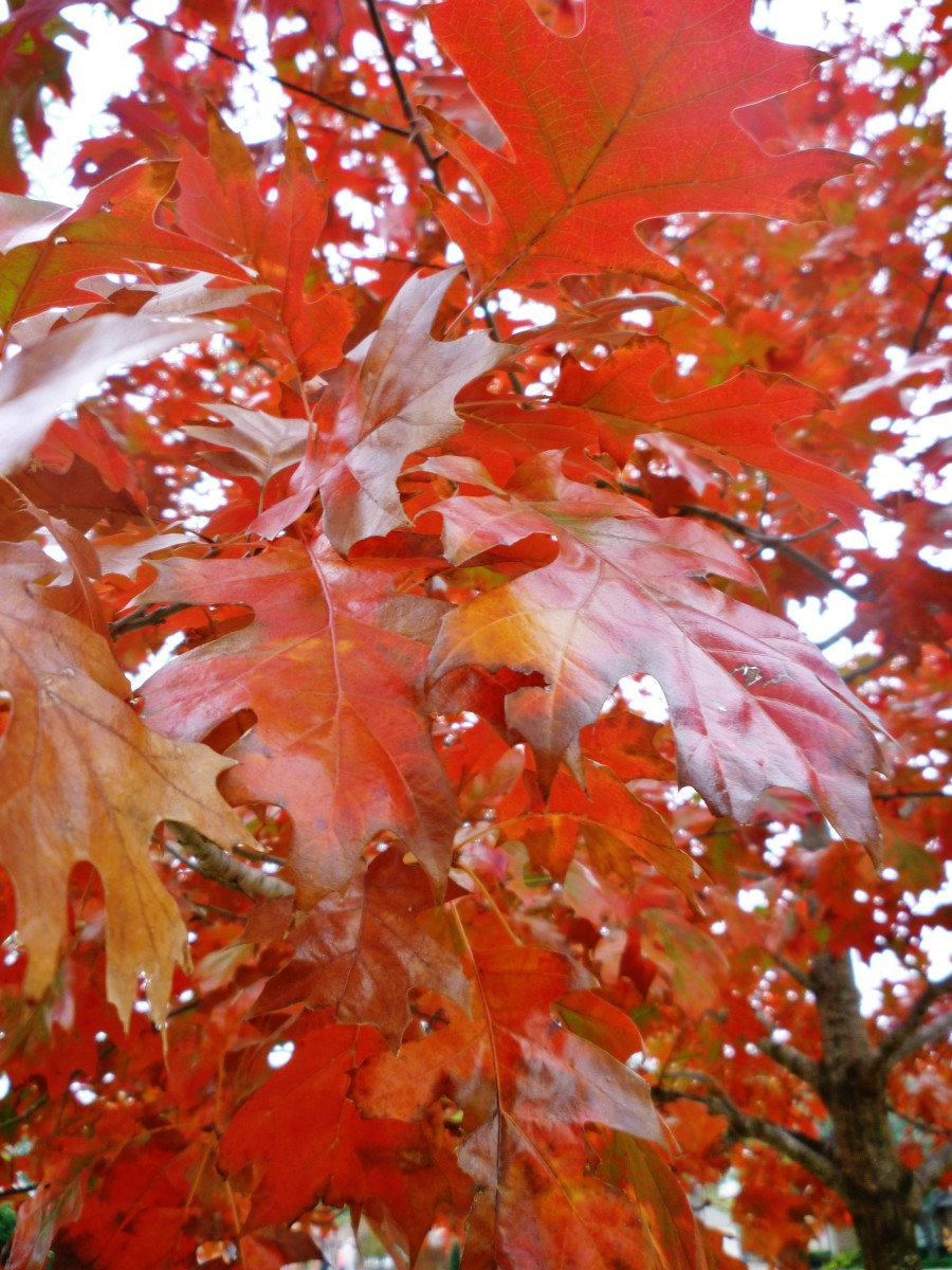 Fall Colored Leaves: Photos of Colorful Autumn Season in Houston, TX