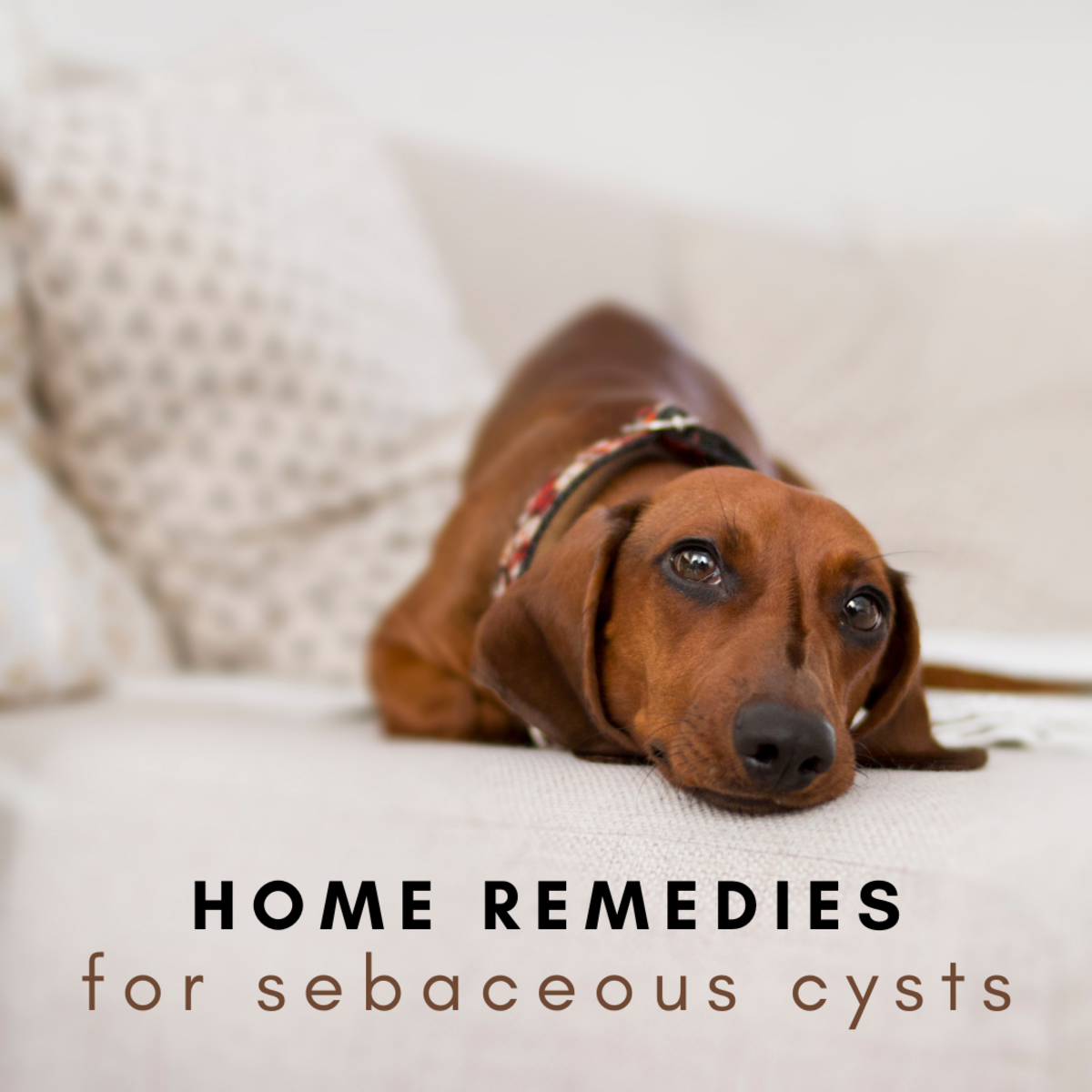 There are several easy and budget-friendly ways to remedy your dog's benign cyst at home.