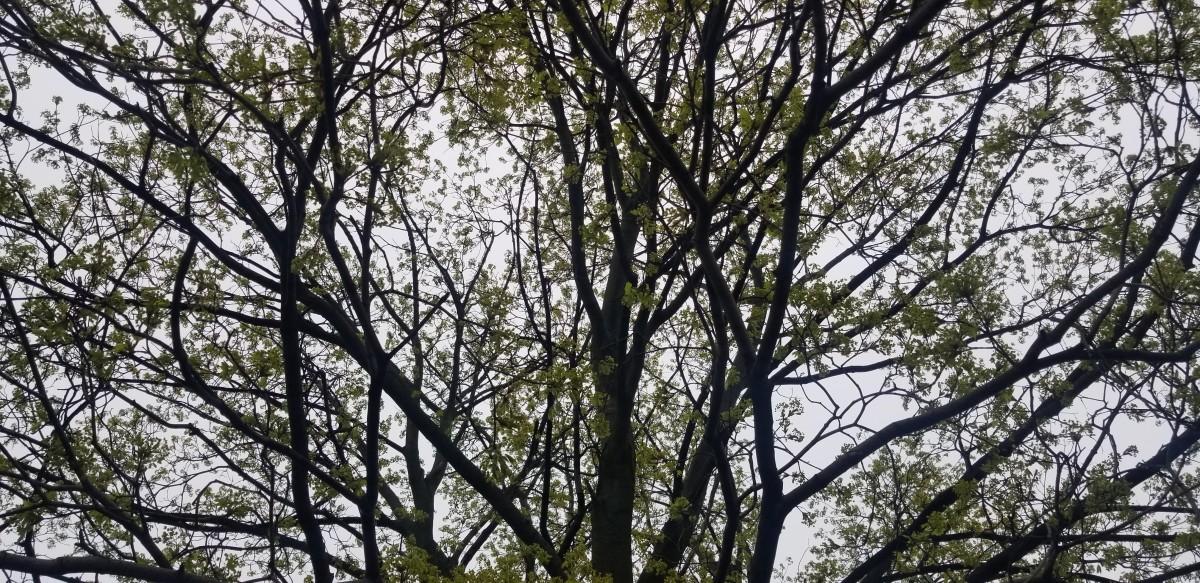 Forest Rain