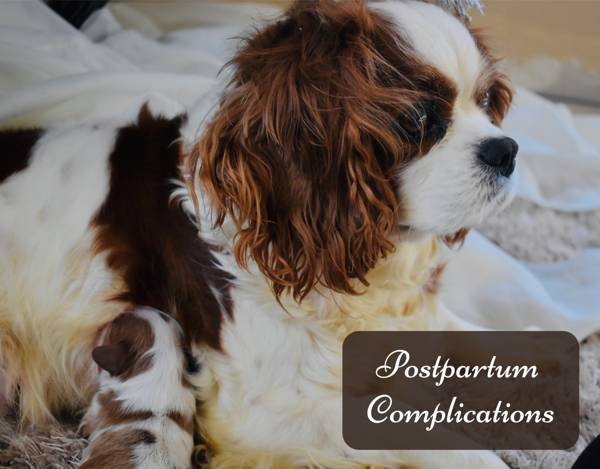Learn what is normal or abnormal in your dog after giving birth.
