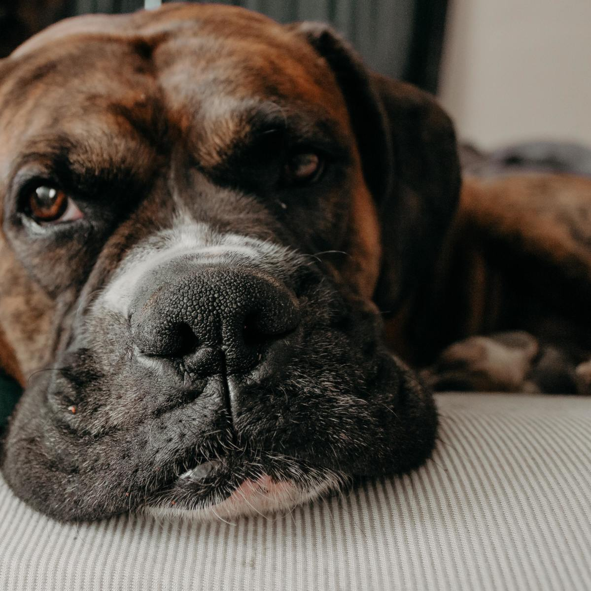 If your dog is coughing up foam, he likely feels miserable. Don't hesitate to take him in to the vet.
