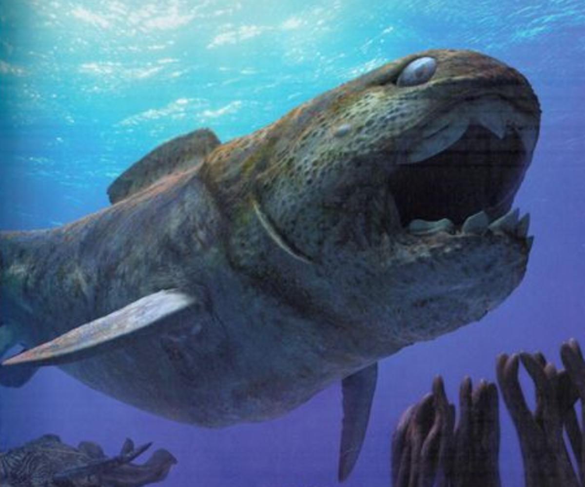 DUNKLEOTEUS PLACODERM (T-Rex of the Devonian)