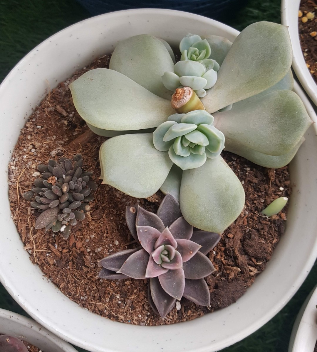 should-i-propagate-my-succulents-from-a-leaf-or-a-branch