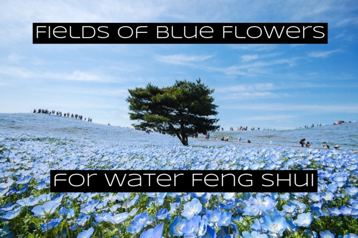 Blue vegetation goes along with water feng shui. Black is another color related to water feng shui. You want blue and black veggies, fruits, and flowers in your water bagua.