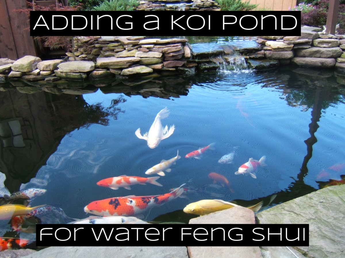 Koi ponds are traditional features in gardens based around feng shui.