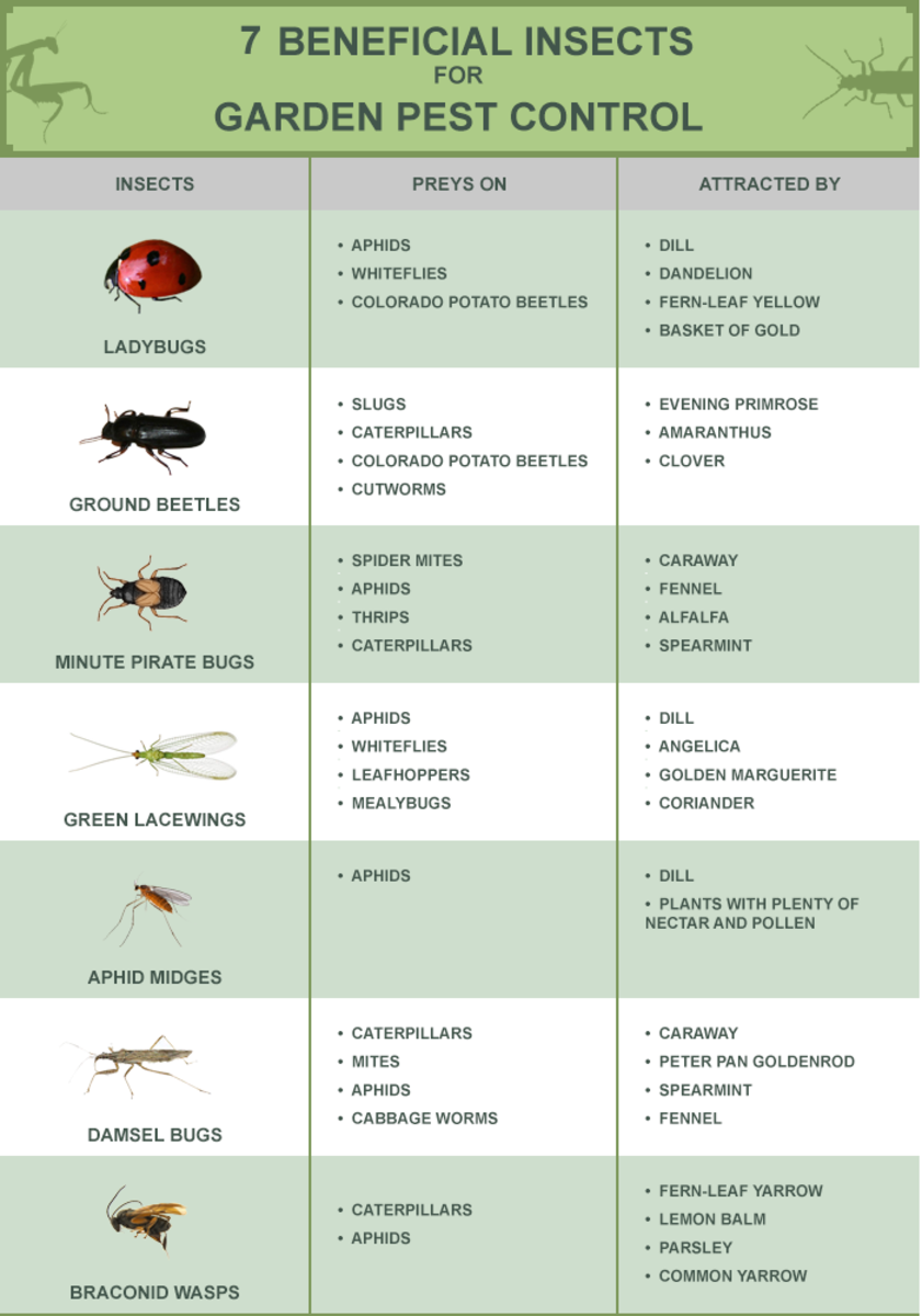 The Benefits of Biological Pest Control in Agriculture