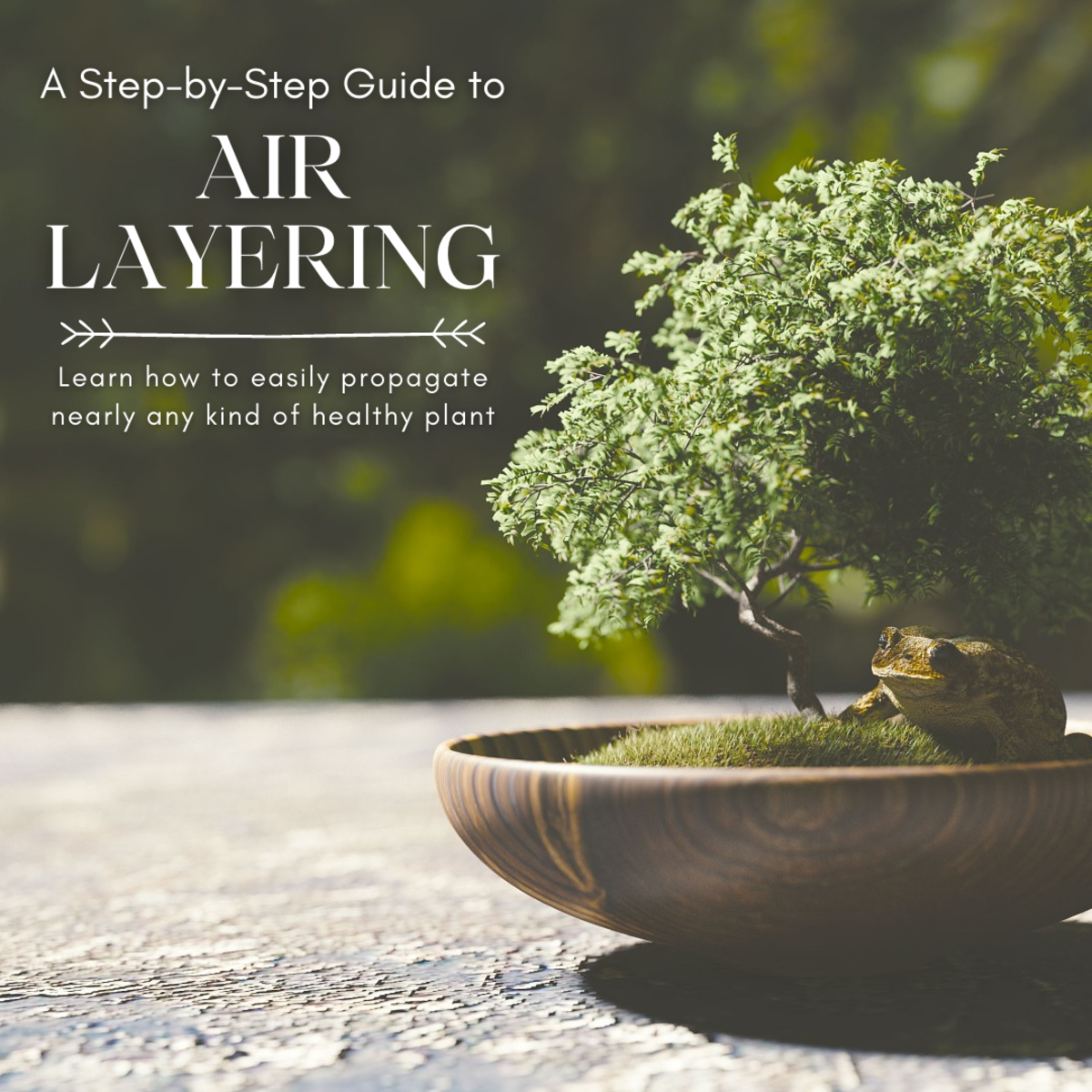 This article will break down the process of air layering a plant step by step.