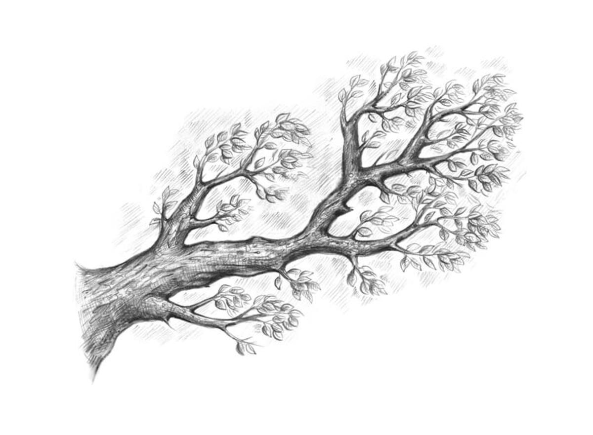 Your branch will need to have leaves and be free of plagues, insects, and other blemishes.