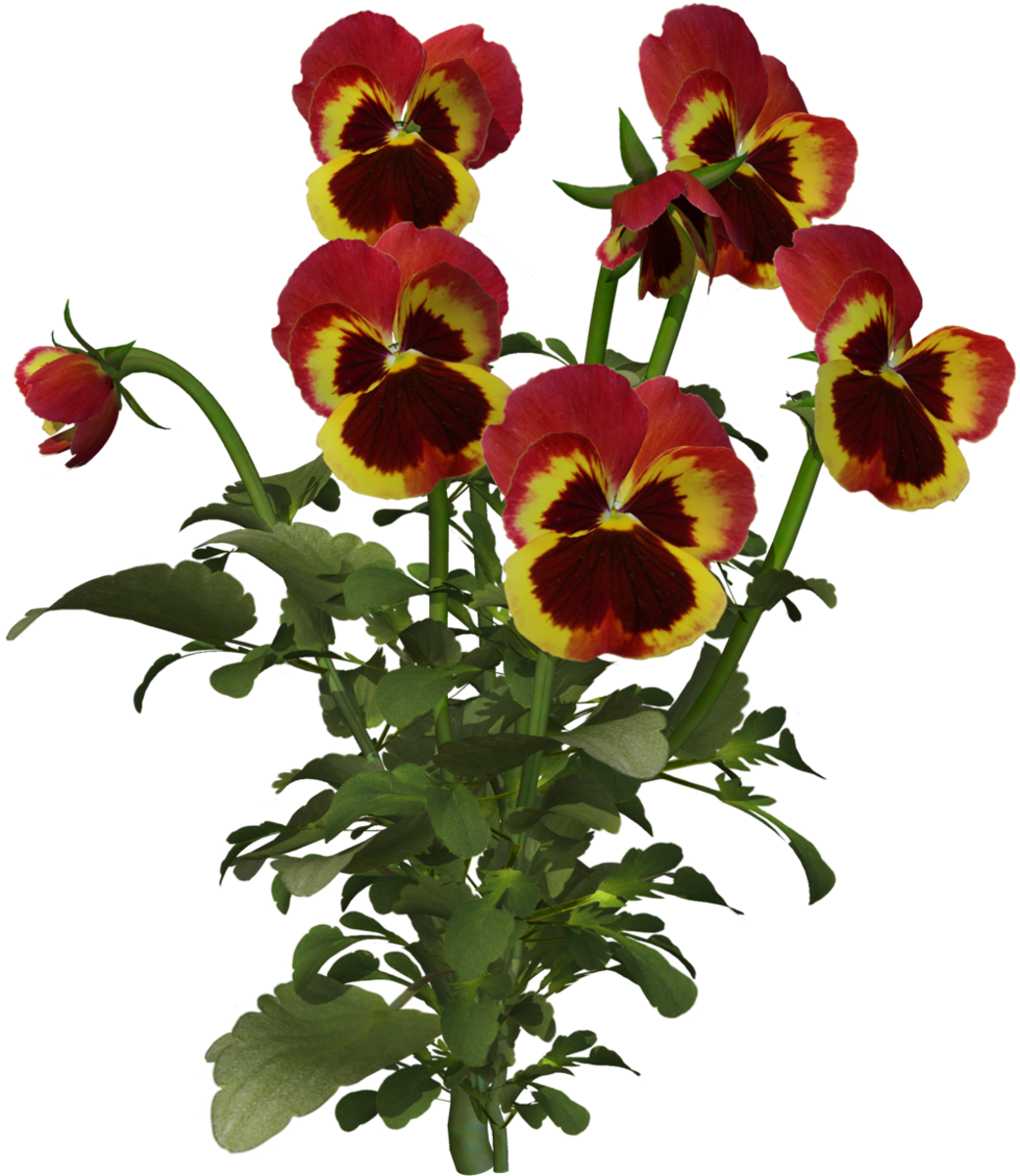 Mother's Day Card Theme - Red Pansies