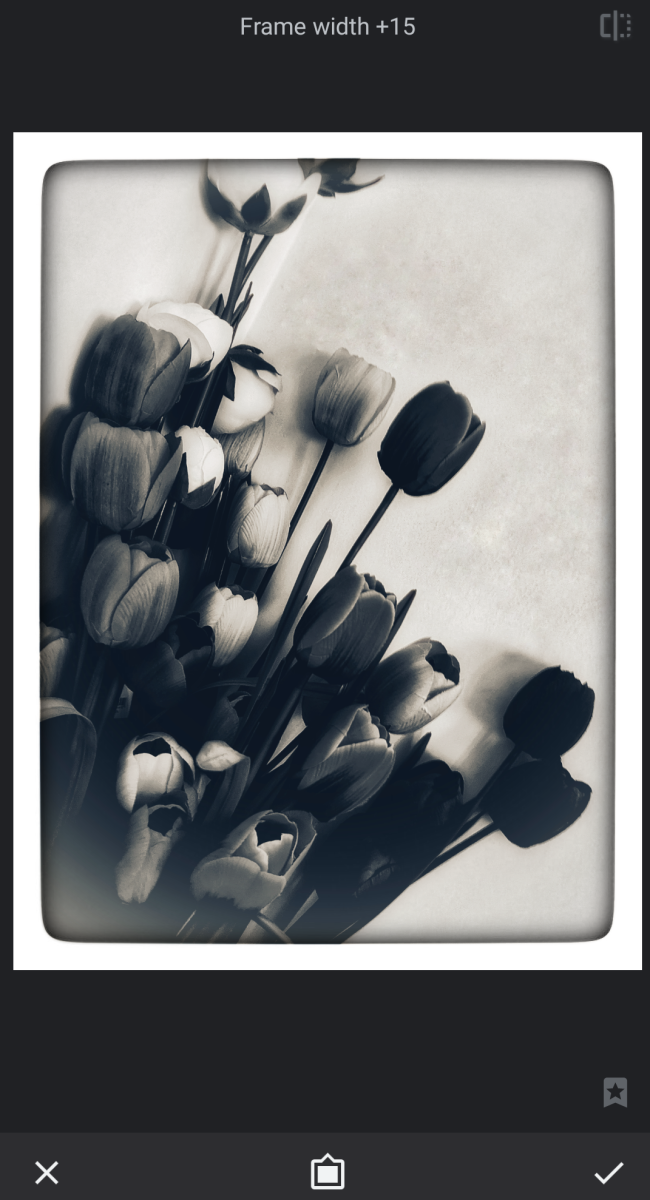 snapseed-beginners-guide-to-creating-black-and-white-photoedits