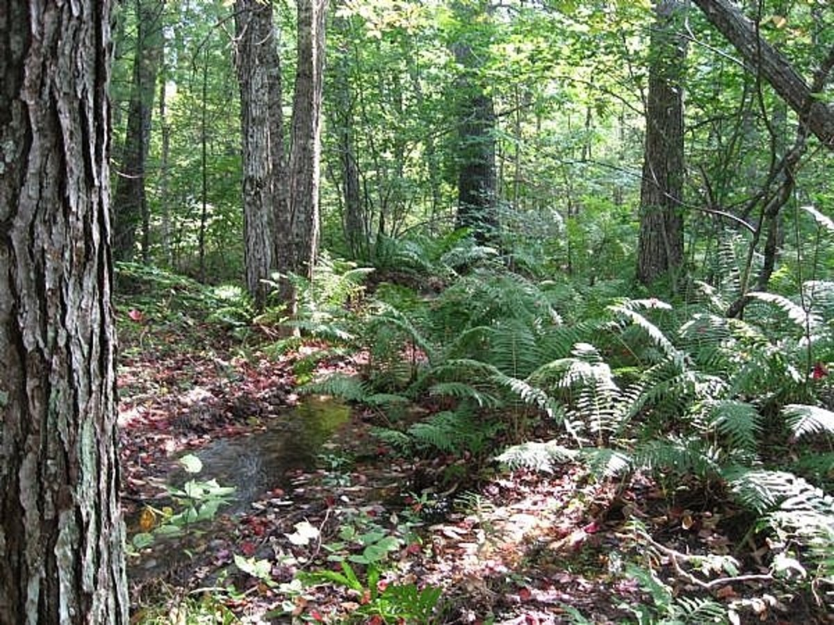 where-to-find-morel-mushrooms-2