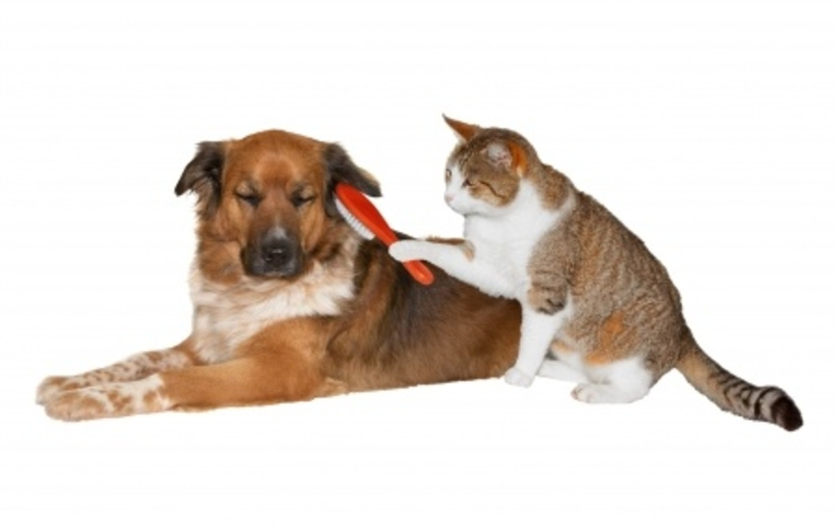 Wait a minute....the dog should be brushing the cat!