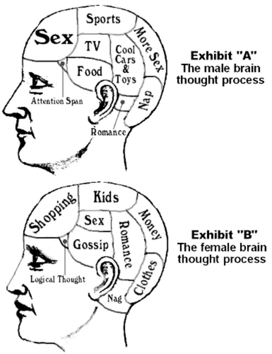 BRAINS: MALE AND FEMALE HE MADE THEM
