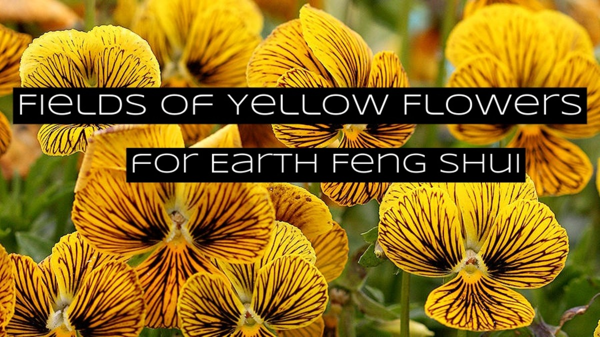 Yellow and brown are the main colors for earth in feng shui.