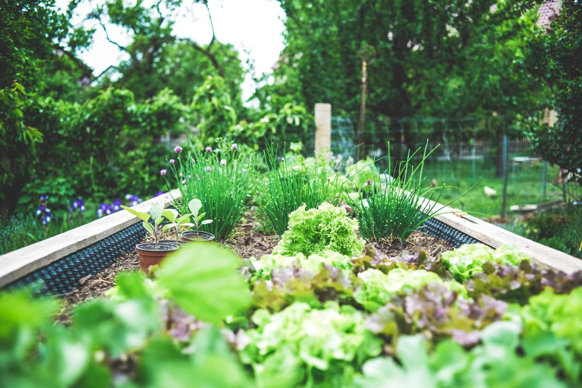 Control garden pests without using chemicals.