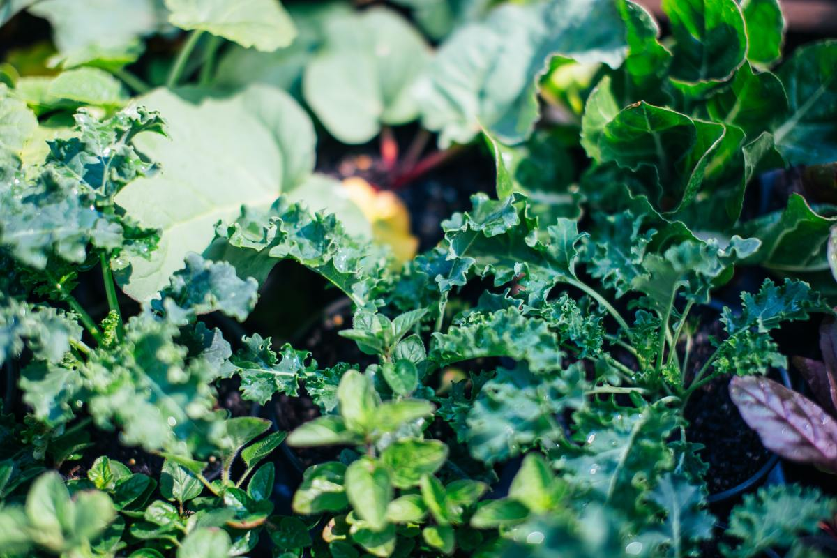 Plant a variety of flowers and veggies to prevent pests from overtaking your garden.