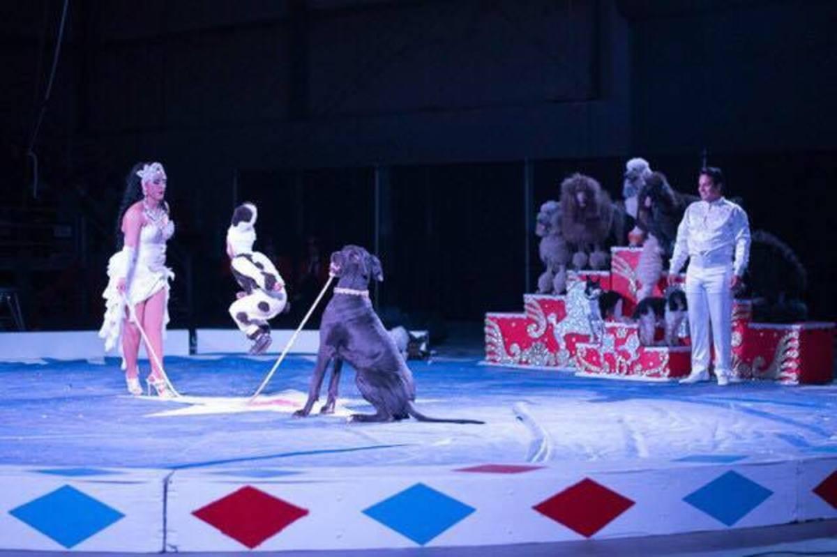 producing-a-shrine-circus