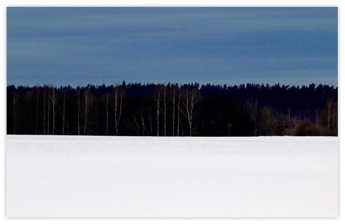 The Estonian banner is a representation of the winter forest on the horizon.