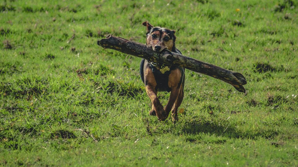 Some dogs have more energy and need more exercise than others.