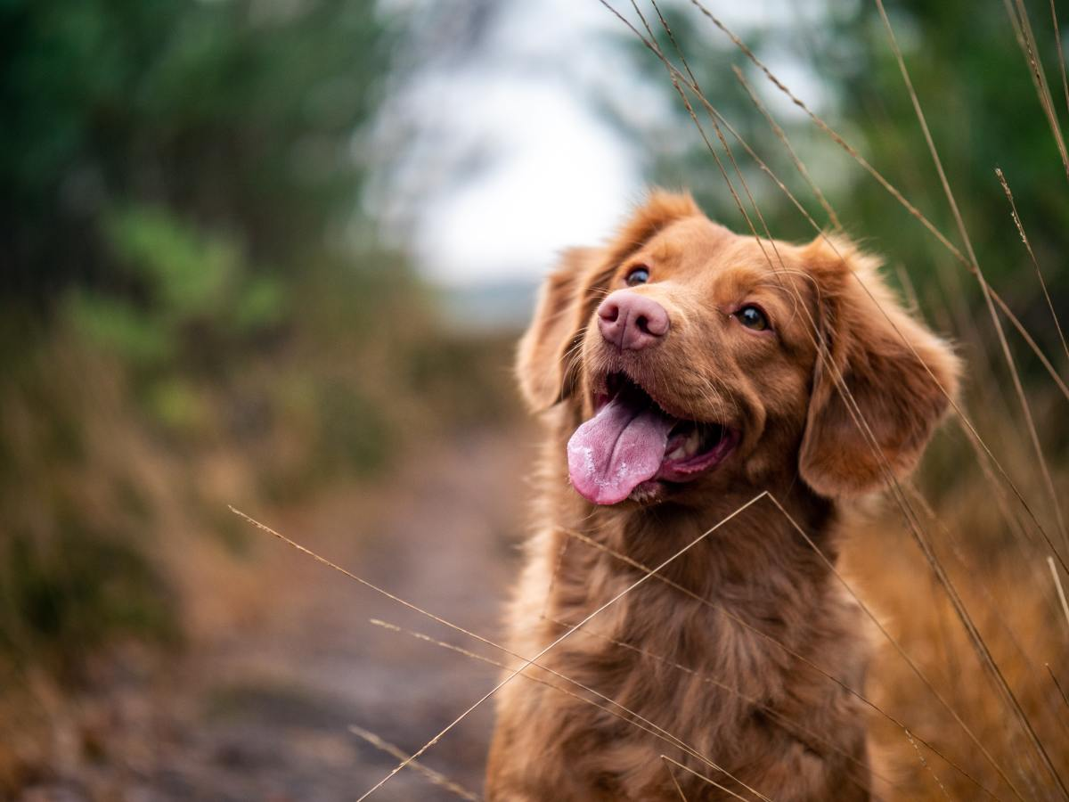 Five things to think about before adopting a dog.