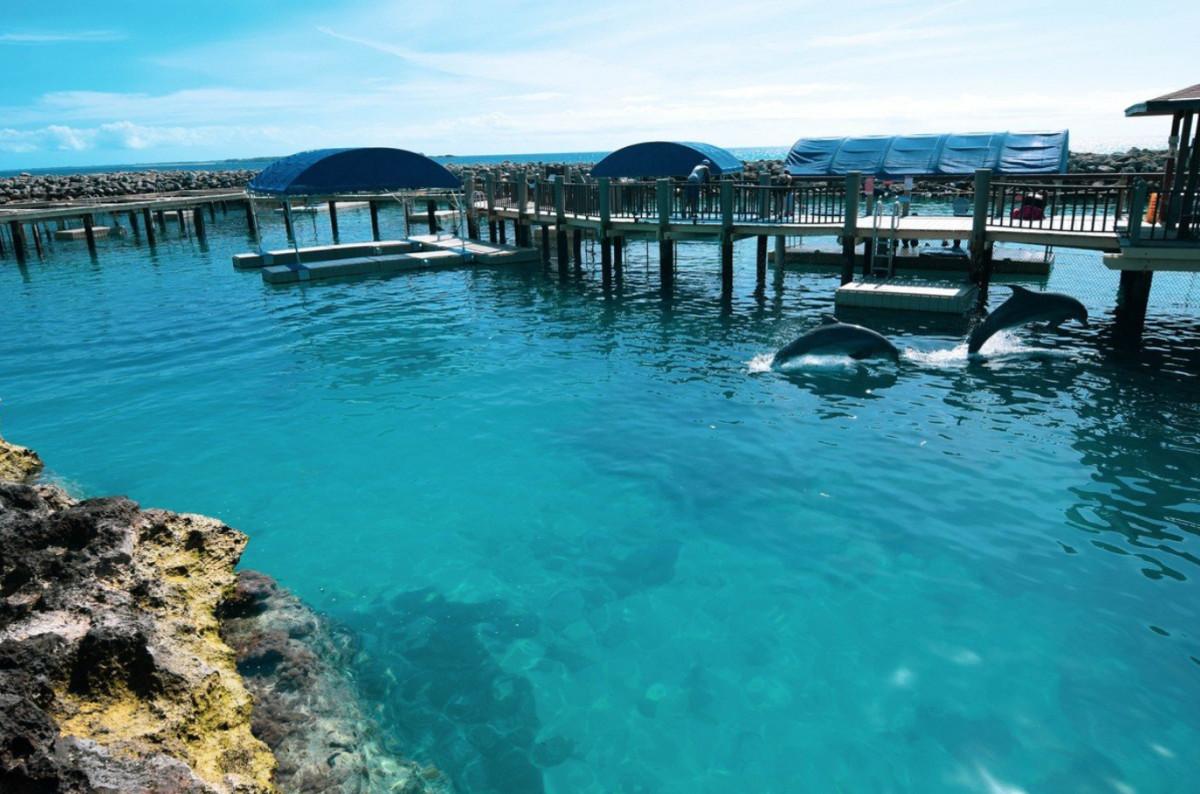 Dolphin Encounters at Blue Lagoon Island
