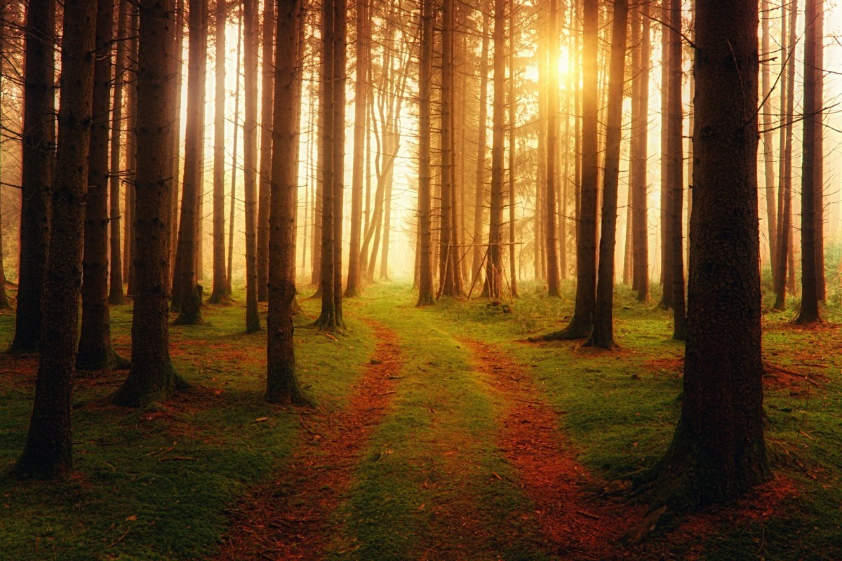 five-mystical-forests-of-europe