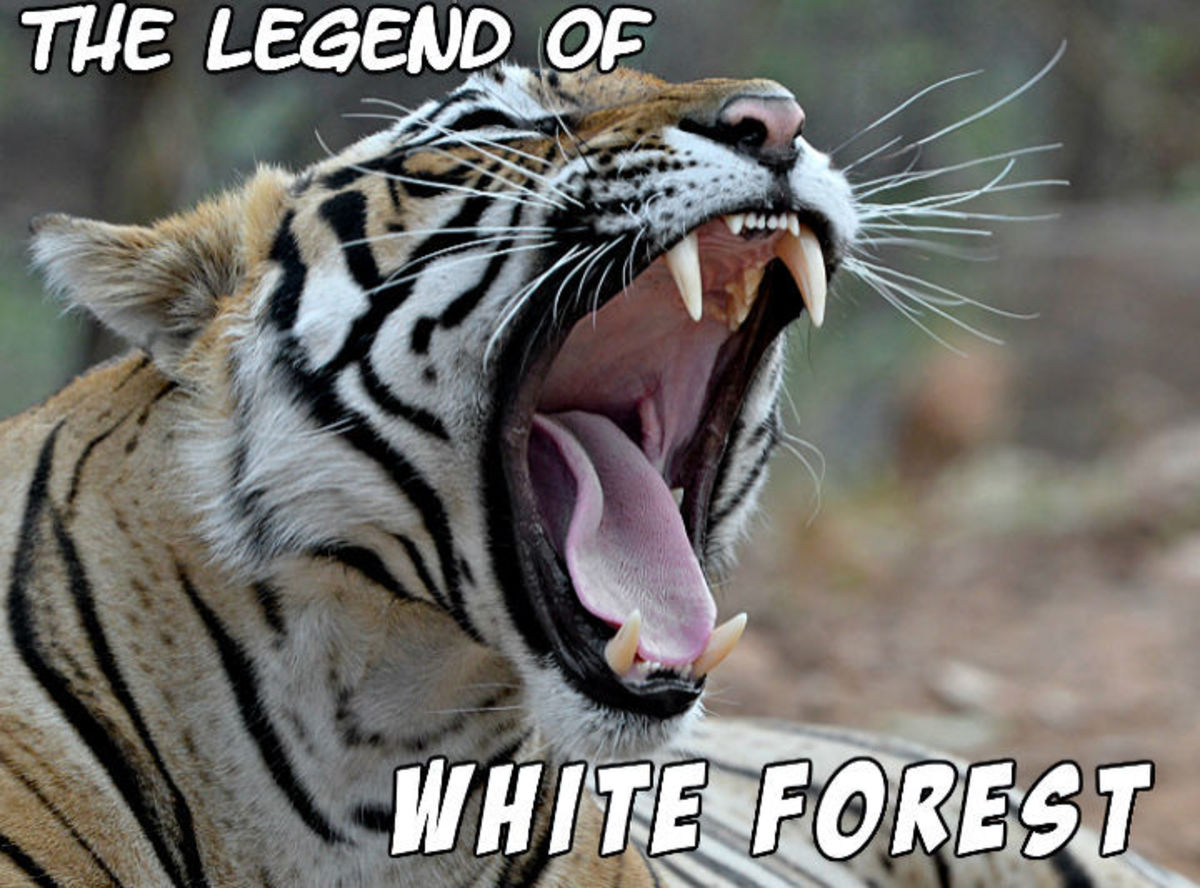 The Legend of White Forest 16
