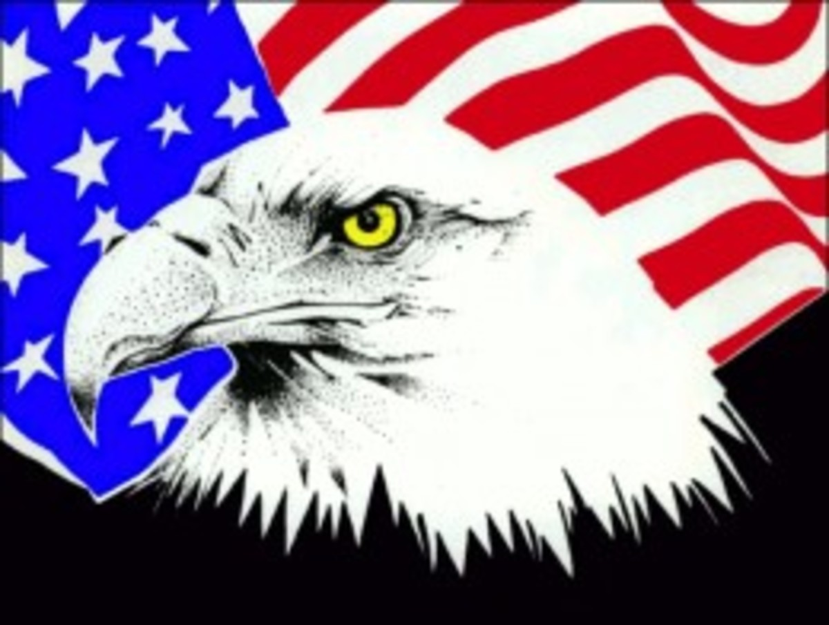 American Eagle - National Bird of America