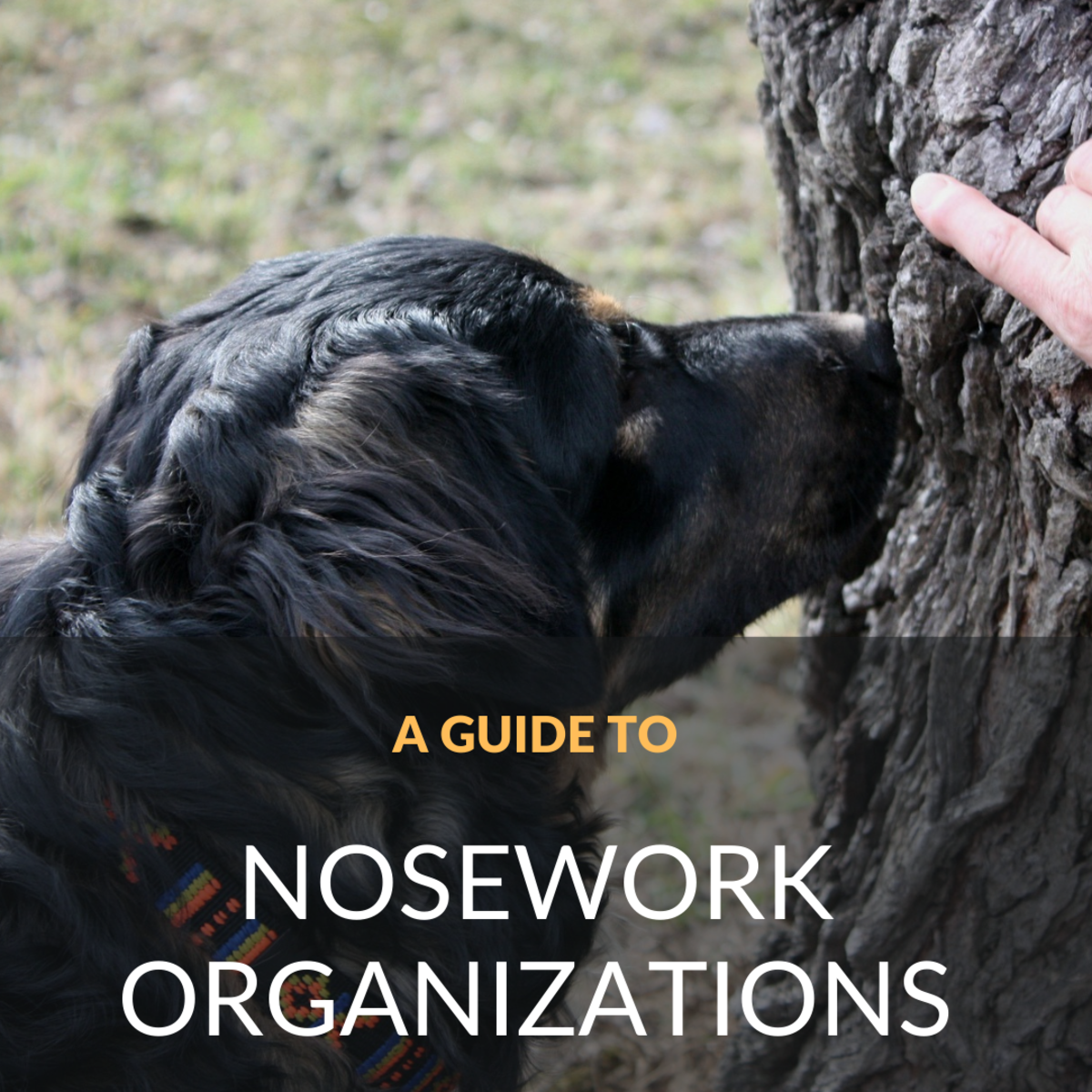 Here's a guide to some of the more well-known canine nosework organizations in addition to a run-down of the types of training/trial environments.
