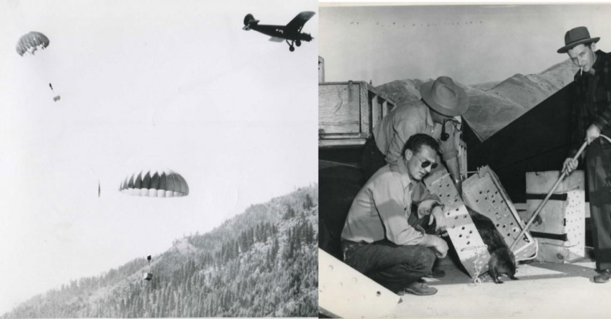 The Story of Operation Cat-Drop