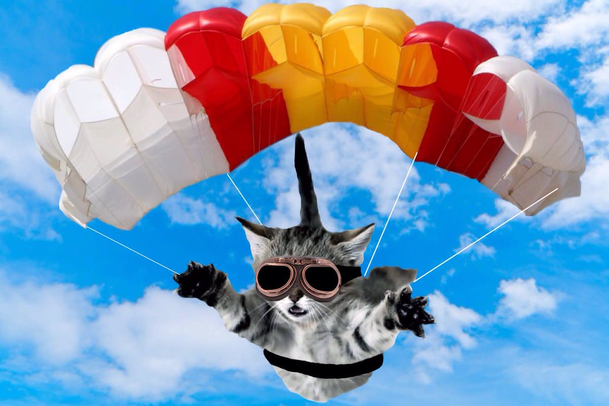 The parachuted cats saved Borneo residents from perishing to disease