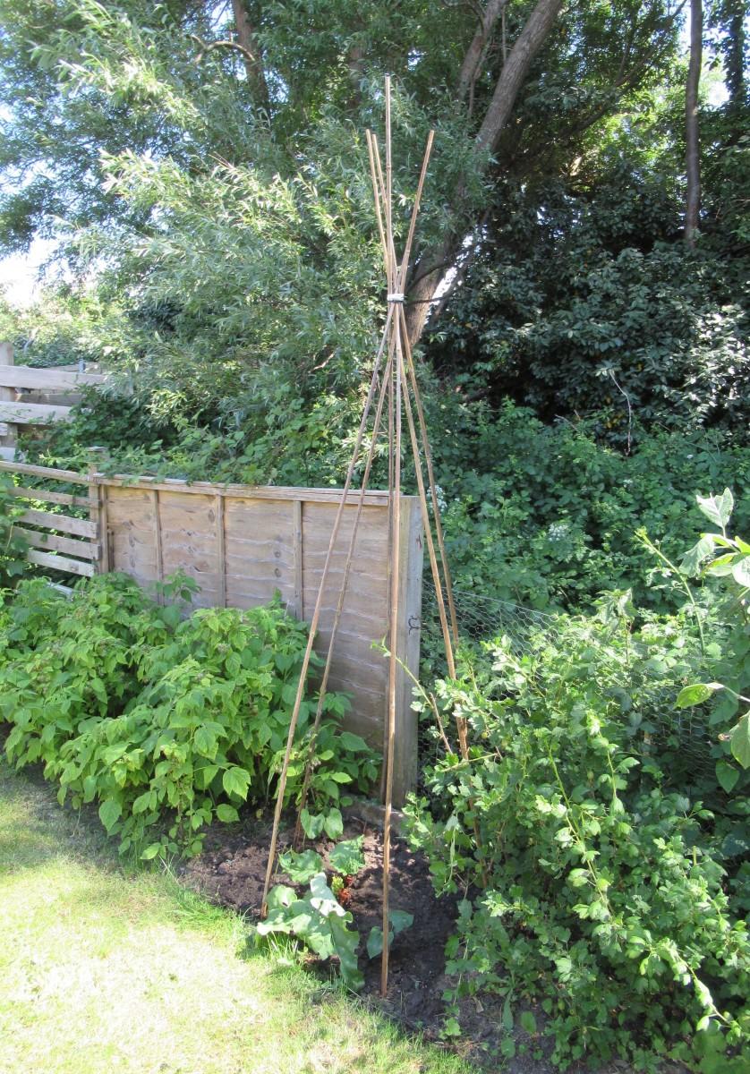 Luscious greenery plus raspberry, gooseberry & rhubarb