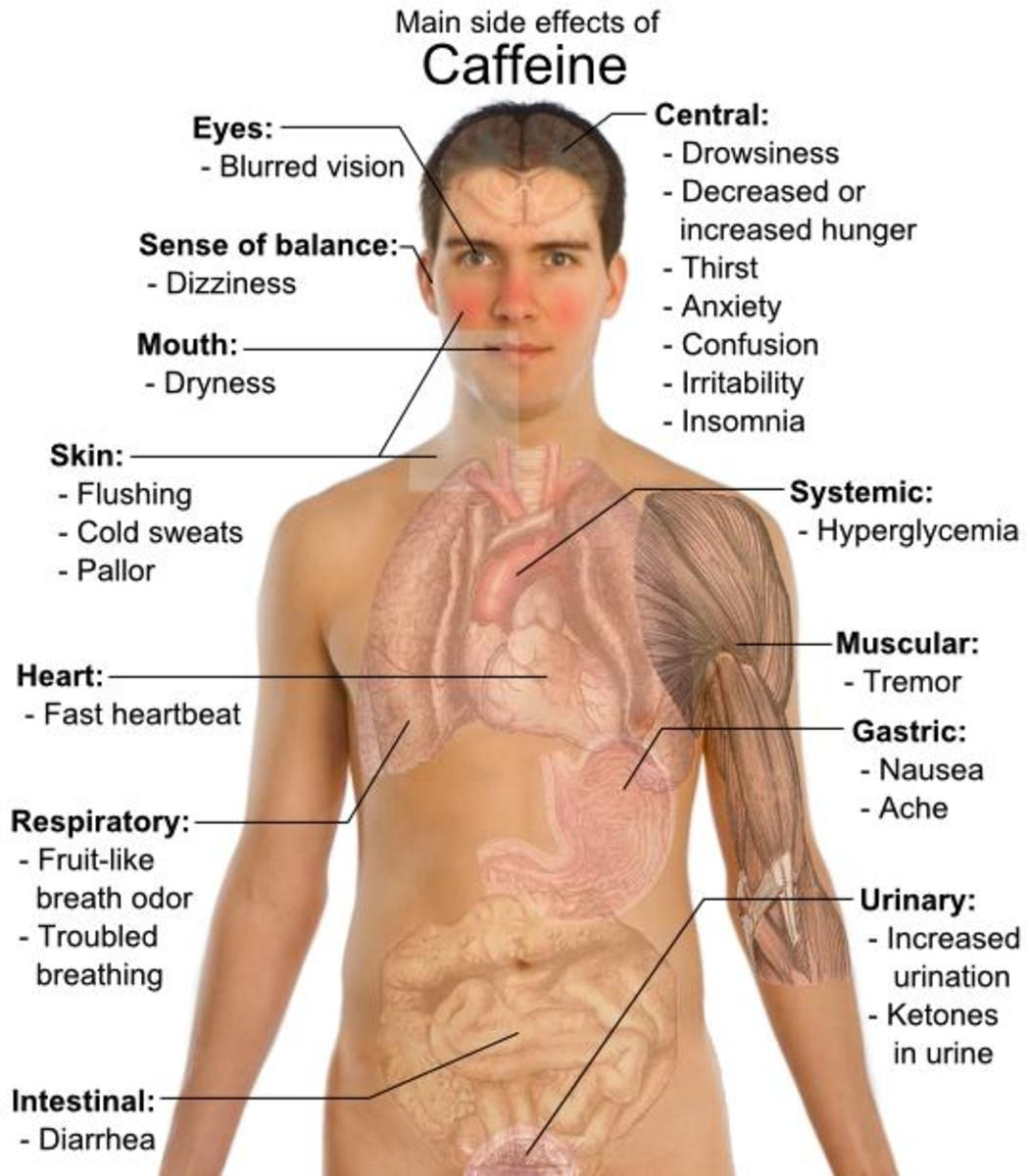 The Human Body and Its Caffeine Affects on a Diagram of a Young Brunette Male