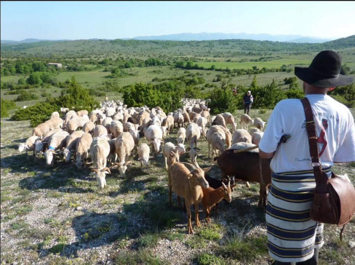 A French Shepherd