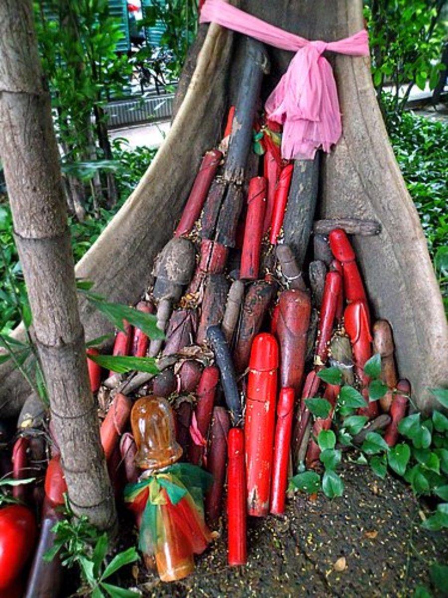 Penises at base of banyan tree
