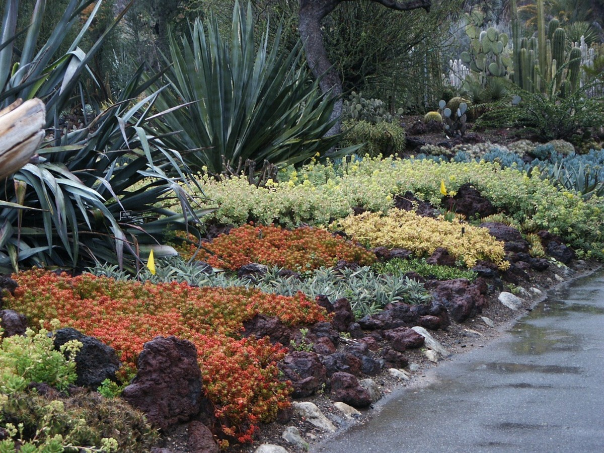 An example of ground covering plants at their best