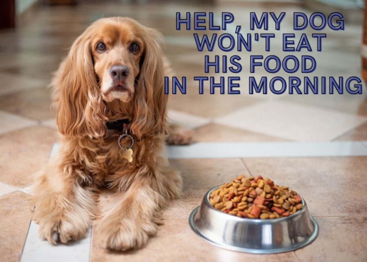 Help, My Dog Won't Eat Food in the Morning