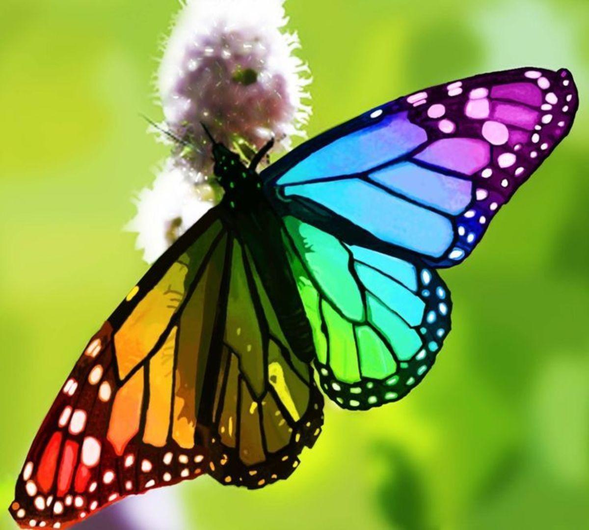 Shimmering Wings