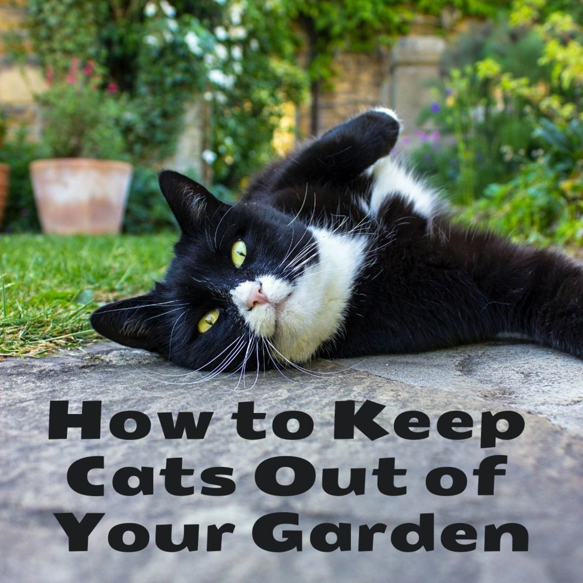 How to Stop Cats From Coming Into Your Garden