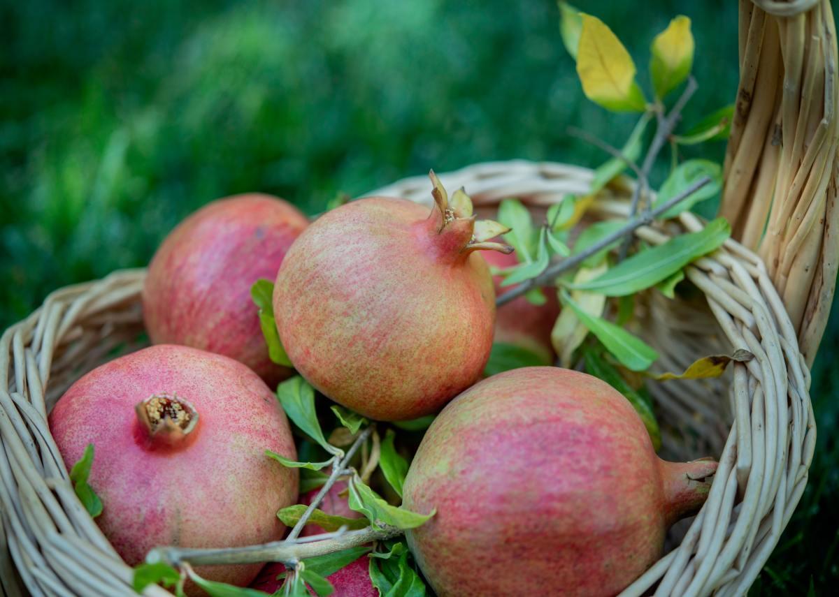 Basket of Homegrown Pomegranates