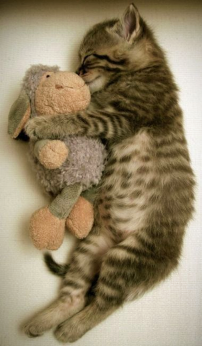 Awww.... now she sleeps with her toy! Perfect solution.