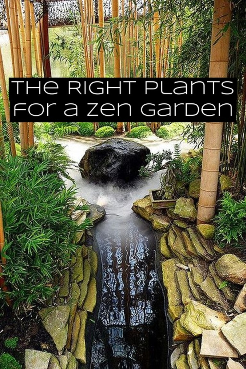 There shouldn't be too many plants in your zen garden. You want the space to focus more on rocks. Suggested plants include: bamboo, azaleas, bonsai trees, and Japanese maples.
