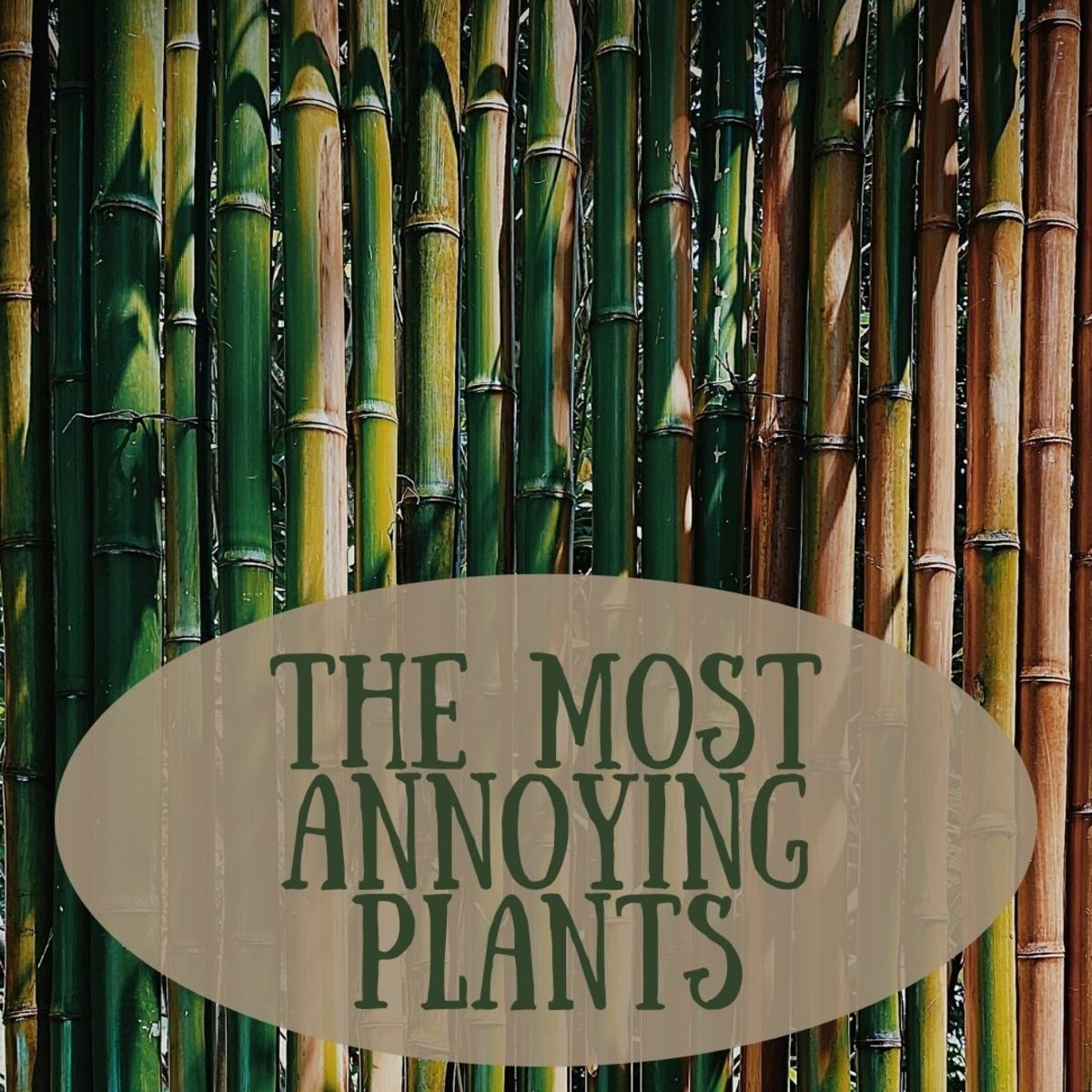 Ten Passive-Aggressive Plants to Give Your Enemy