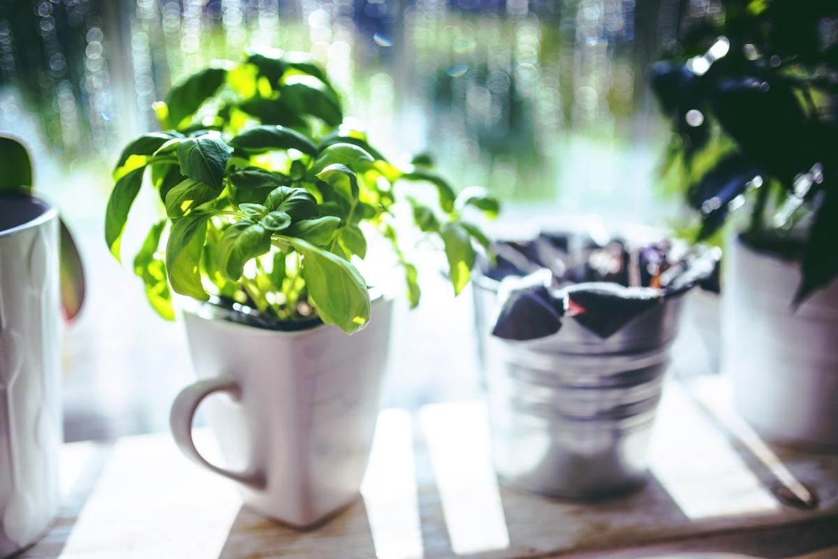 Have a spare coffee mug? Grow basil!