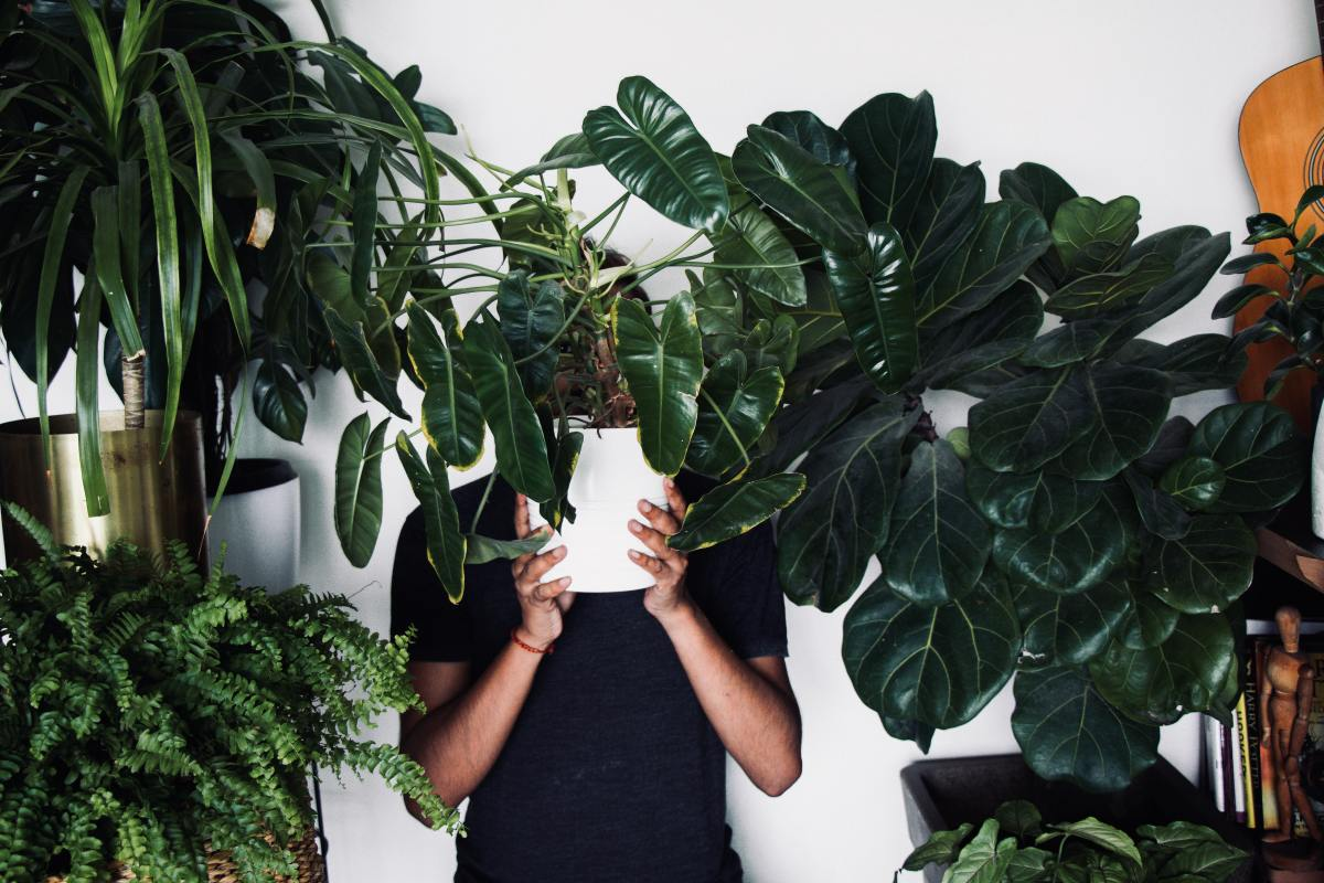 Tips for Healthy Houseplants
