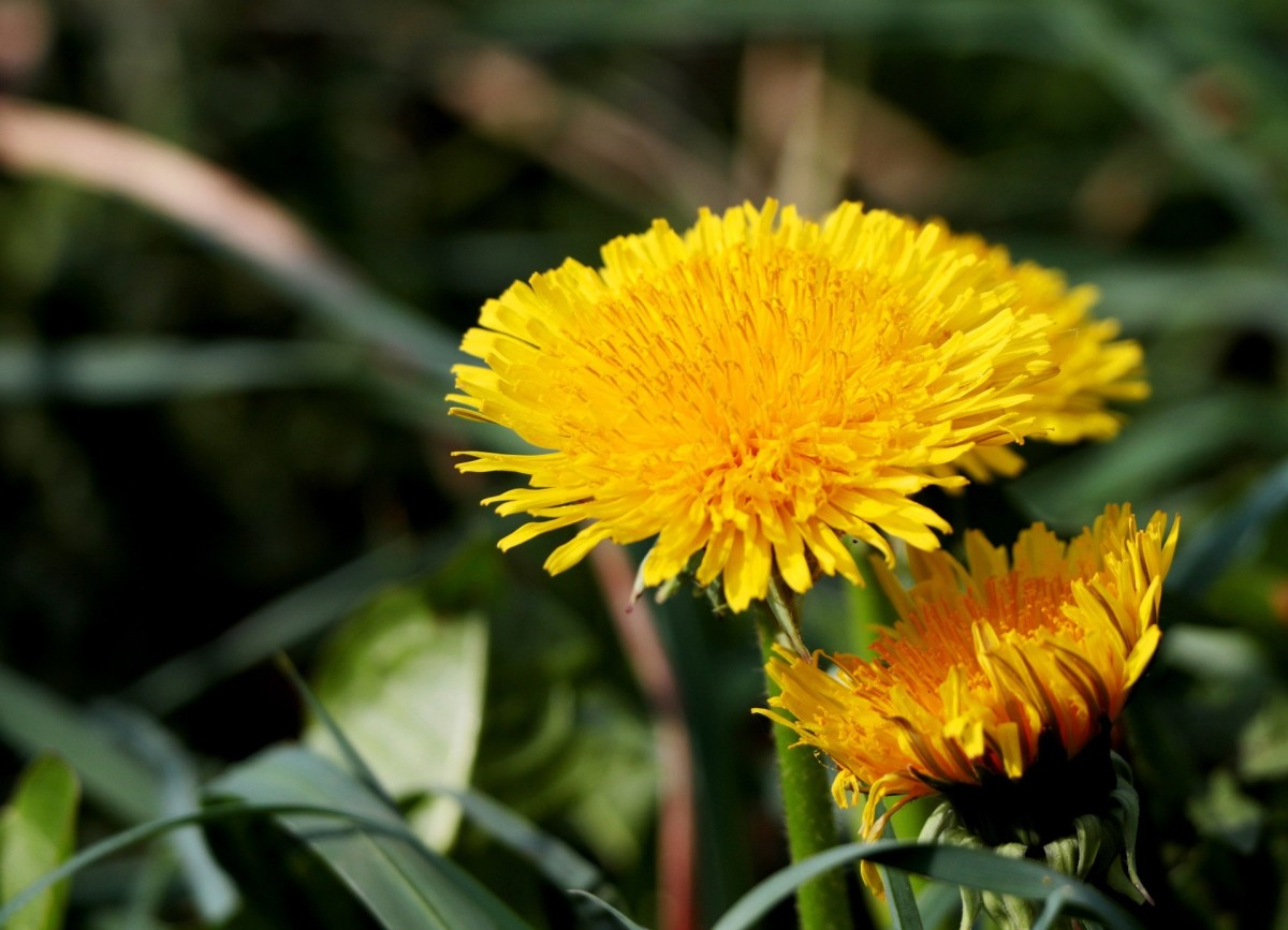 Weed fertilizer is a good base to use with other homemade fertilizers.