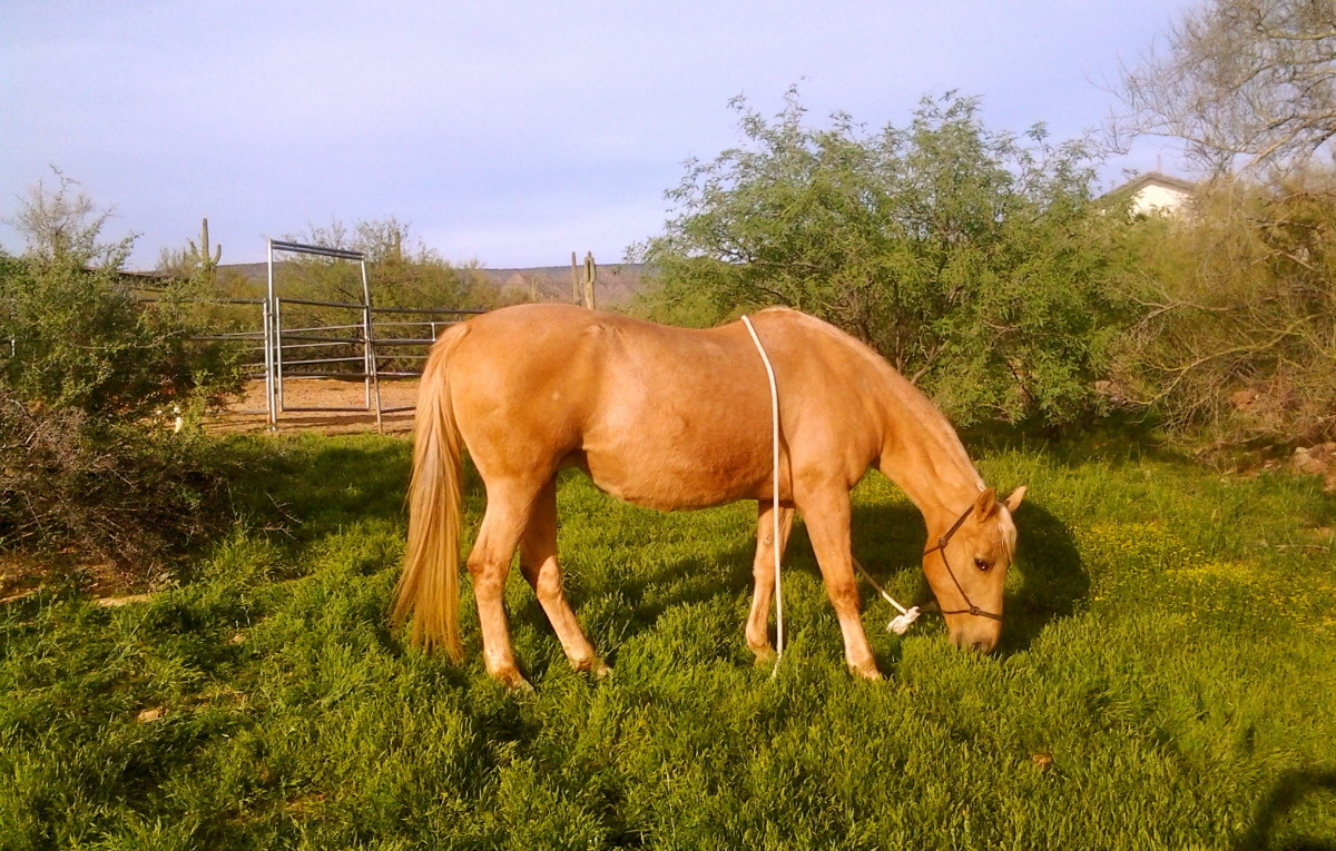 How to Photograph Your Backyard Horse for Sale