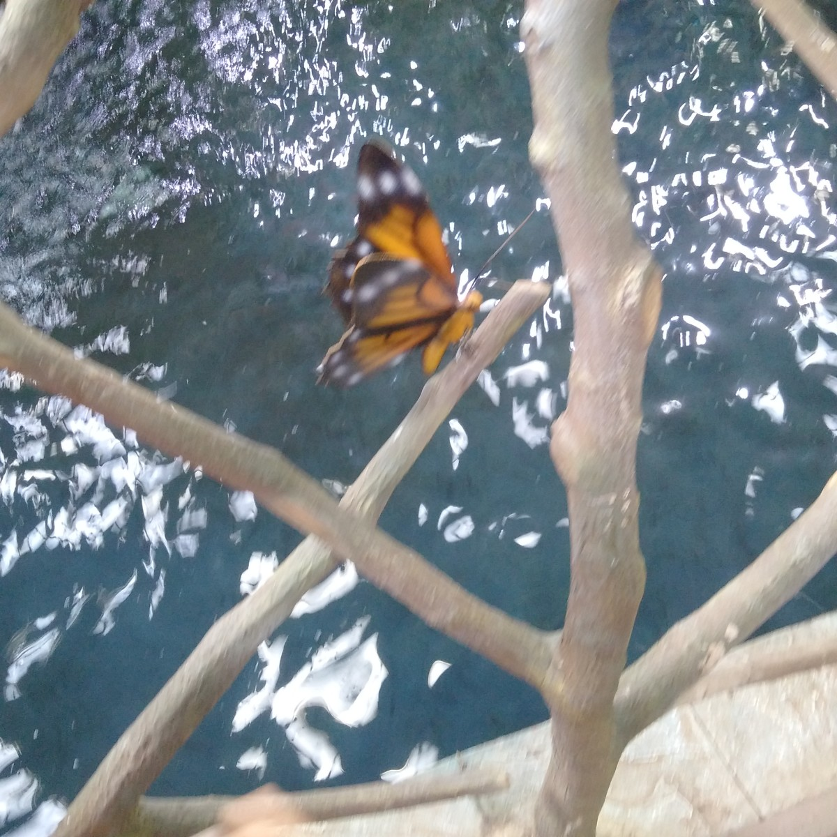 The Butterfly Park in Dubai: Just Like a Dream